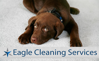 dog-carpet-cleaning