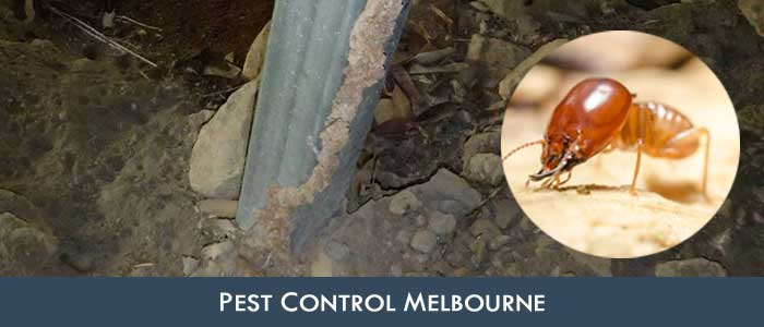 Pest Control Crystal Creek
