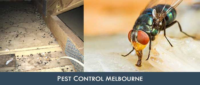 Pest Control Oakwood Park