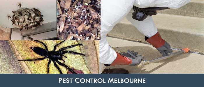 Pest Control Spargo Creek